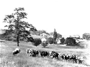 By 1926 the Winterthur herd consisted of more than 300 registered Holsteins.
