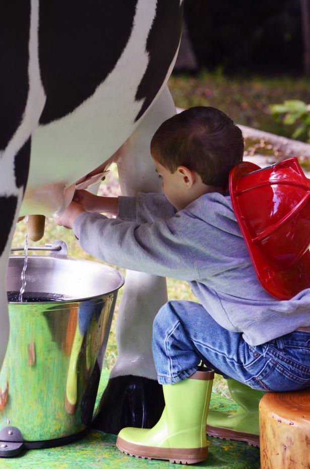 truck and tractor day kid milking cow