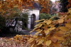 historic bath house viewed through fall leaves