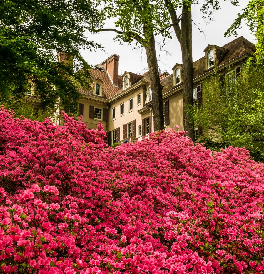 house with azaleas