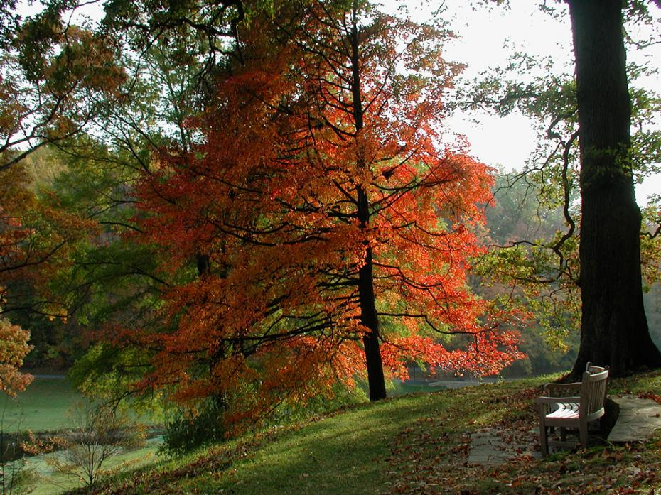 fall foliage near quarry garden