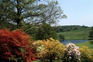 view of azaleas in bloom on Oak Hill