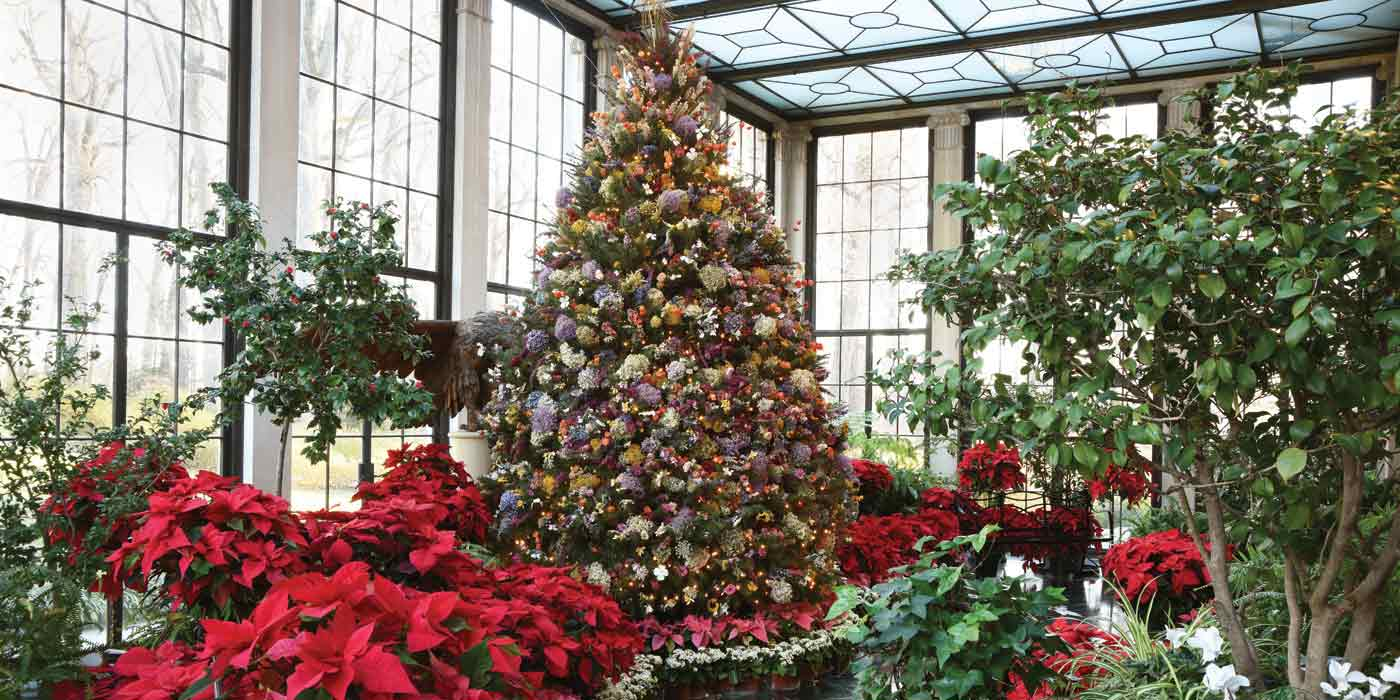 Yuletide Dried Flower Tree with poinsettias in the Conservatory