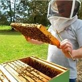 Winterthur Beekeeper and hive.